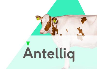 Antelliq